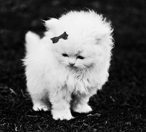 Black and white animal photo adorable animal b baby black and