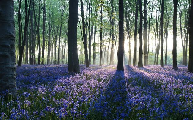 Beautiful Forest Wallpaper With Purple Flowers On The Ground