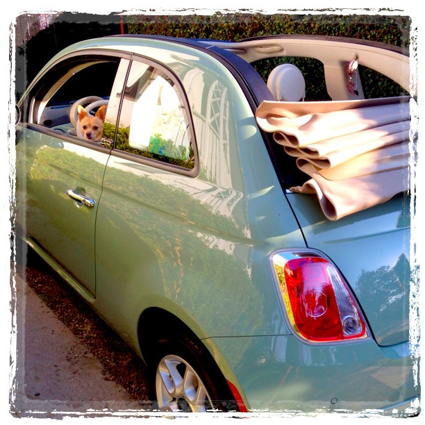 My Fiat 500c Cabrio (with Maxie)