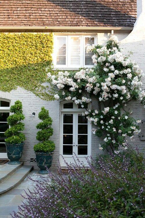 White roses, boxwood and (maybe) verbena- perfect. Both formal and natural