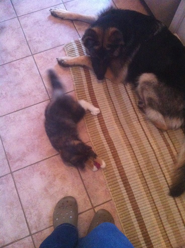 Momma Ava, watches over her new charge Callie, the abandoned kitten