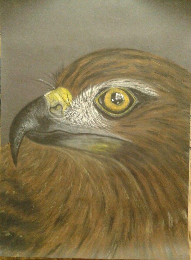 New Zealand Hawk- Oil Pastel