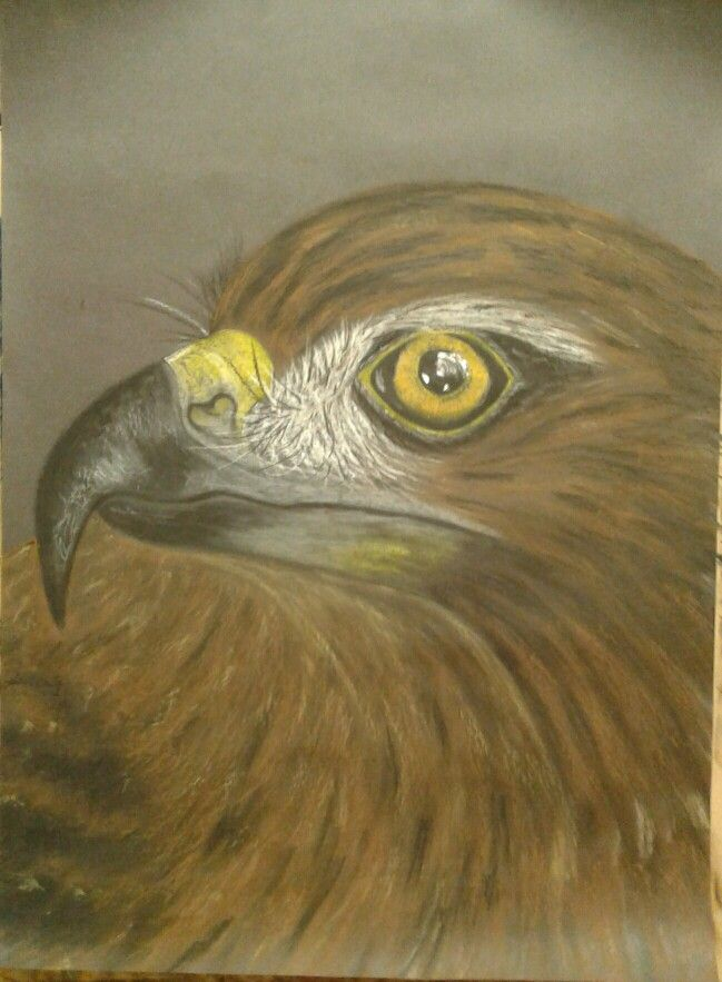 New Zealand Hawk- Oil Pastel