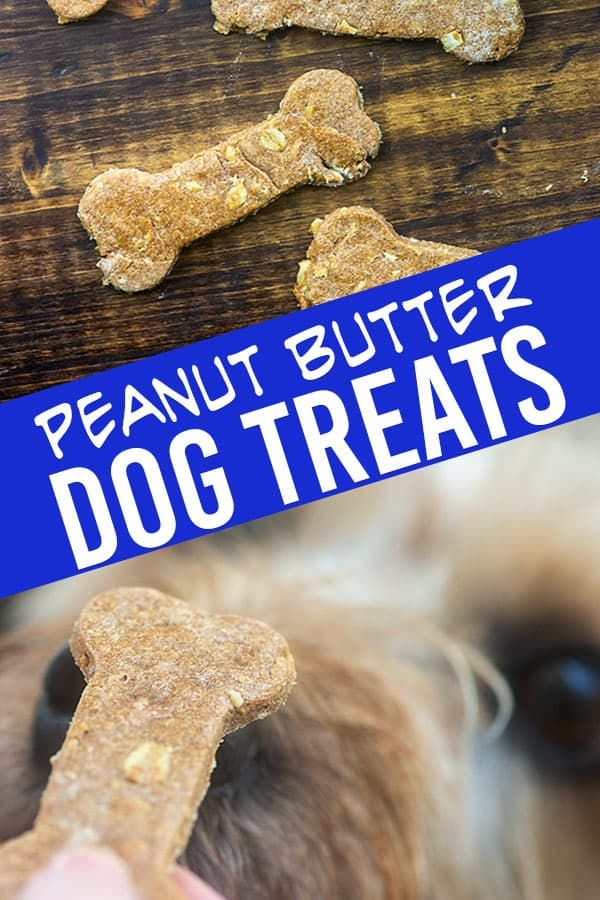 My New Puppy Dog Prefers These Homemade Peanut Butter Dog Treats