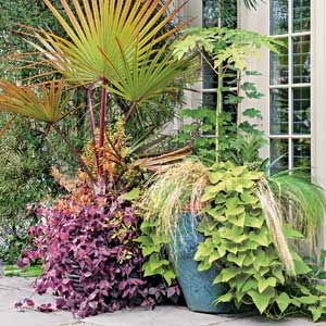 Pots with Personality Follow these design guidelines to get the most impact from container plantings.
