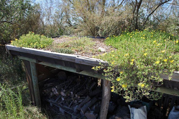 Les 166 meilleures images propos de toitures v g tales for Toit terrasse vegetal