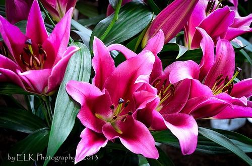 #Lente... Holland Food & Flowers 2013   #Bovenkarspel, #NH