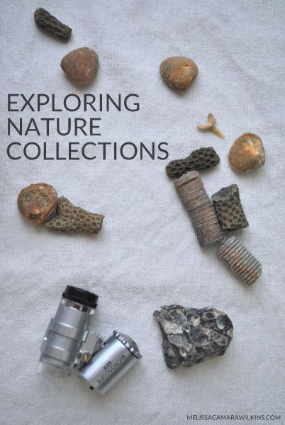 Exploring nature collections. How to set up learning invitations with natural materials.