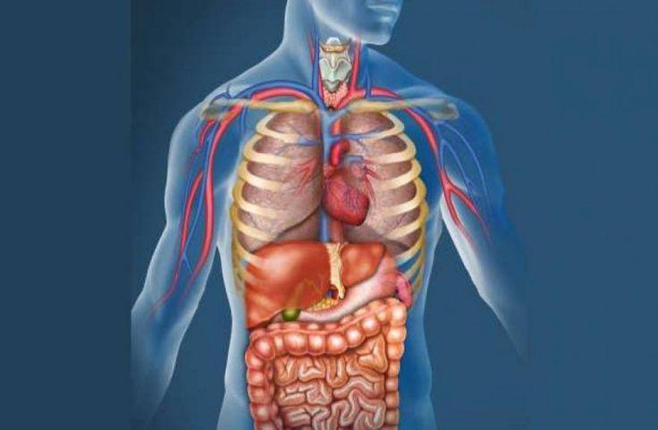 Ο οργανισμός μας διαθέτει βιολογικό ρολόι και κάθε όργανο στο σώμα μας διαθέτει ένα πρόγραμμα...