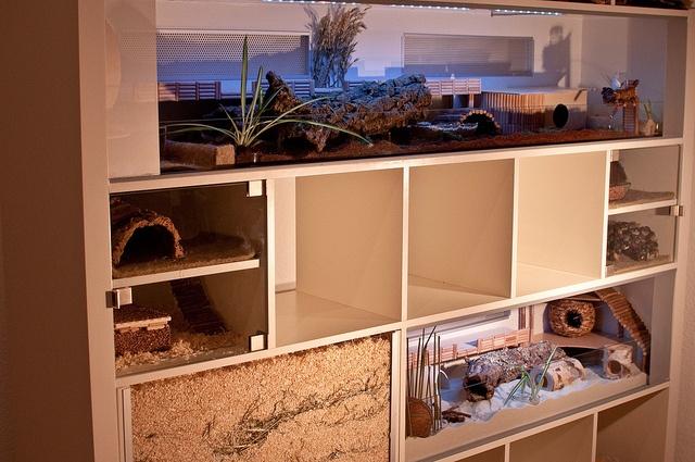 modern hamster environment.
