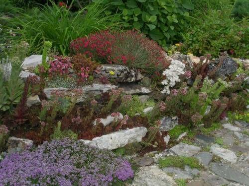Засухоустойчивые растения для клумбы