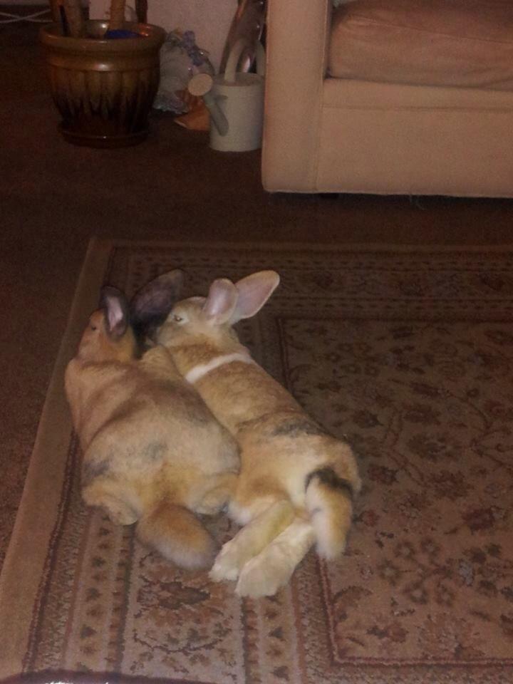 Butts Bunnies Com 45