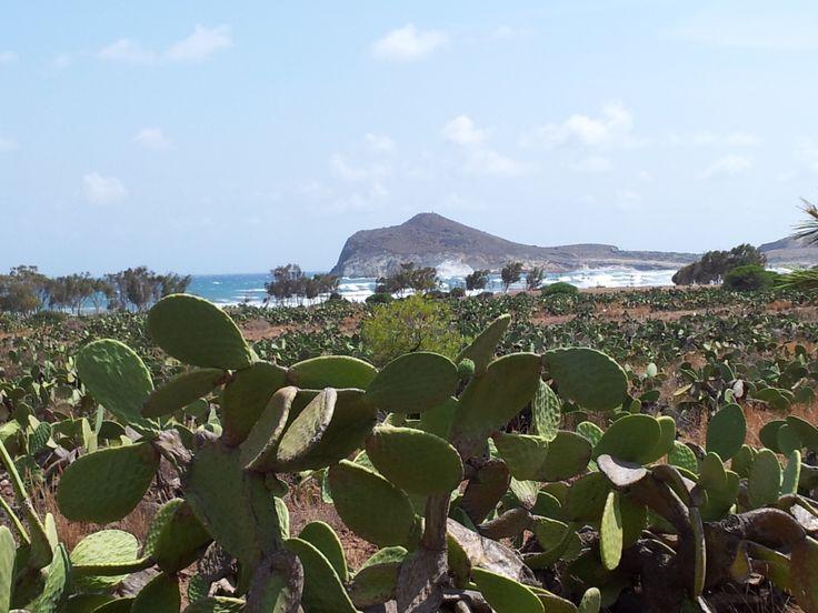 Ensenada de los Genoveses - Playa Genoveses - Cabo de Gata - Almería