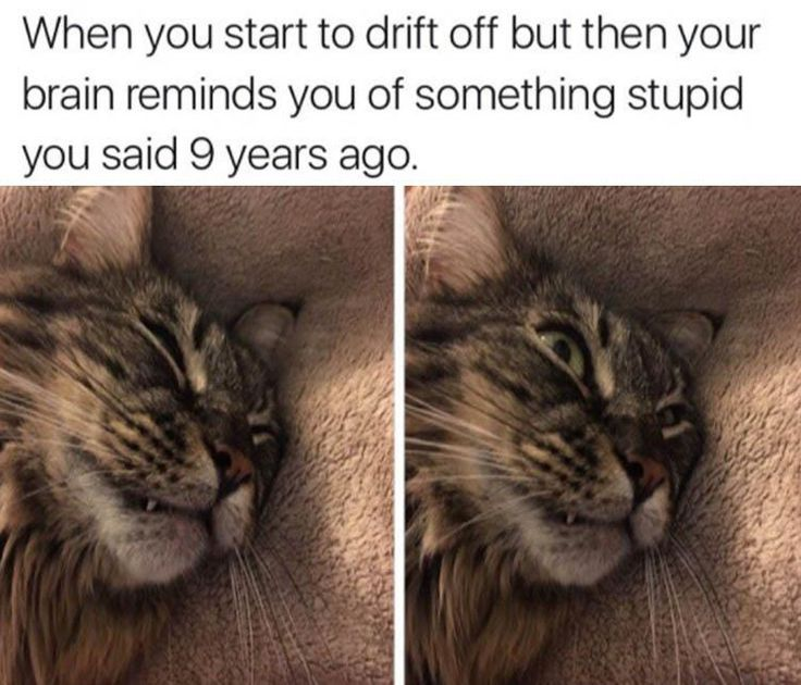 Image result for meme of cat drifting off to sleep