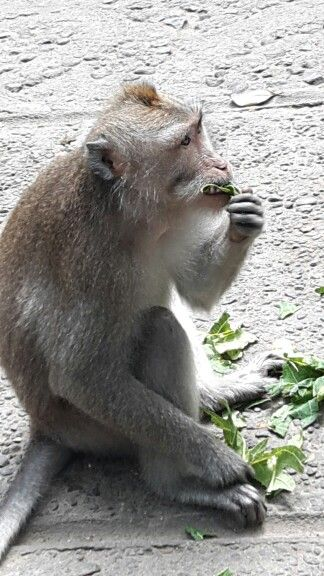 My innocent friend @Monkey Forest Ubud I love this place...