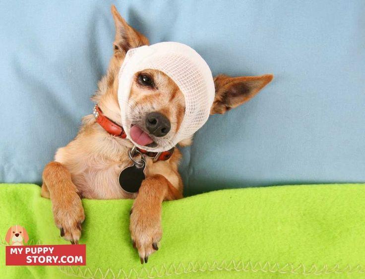 Pet Insurance Reviews: Healthy Paws, Petplan, Pets Best