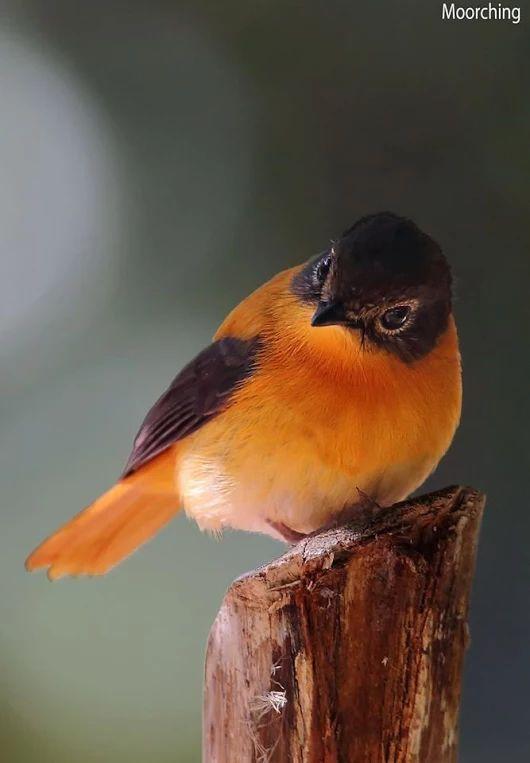 Orange & Black Bird, unidentified as yet.