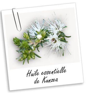 Huile essentielle Kunzea Aroma-Zone