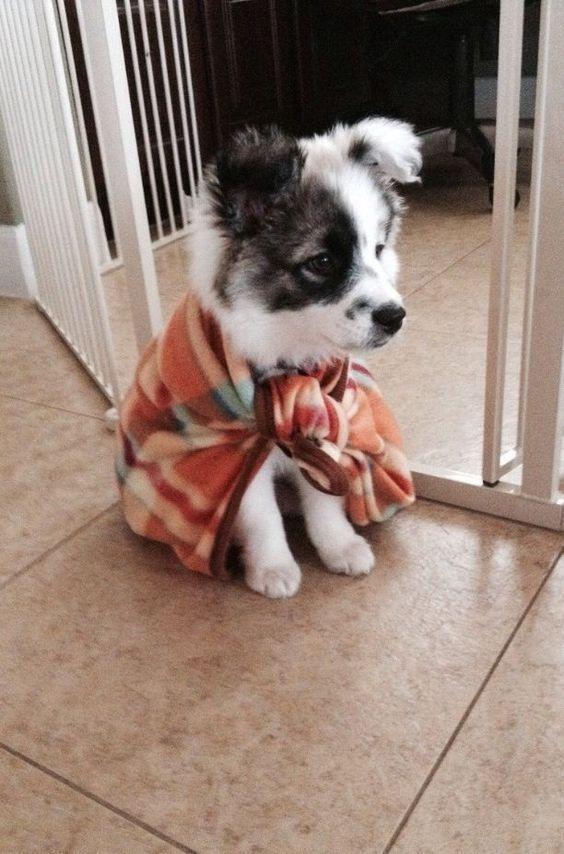 Nossas fotos de animais fofos favoritos   – Hund