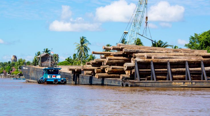 Legacy of years of damage, timber mills still line the rivers.  Local authorities are ever on the alert for illegal logging.