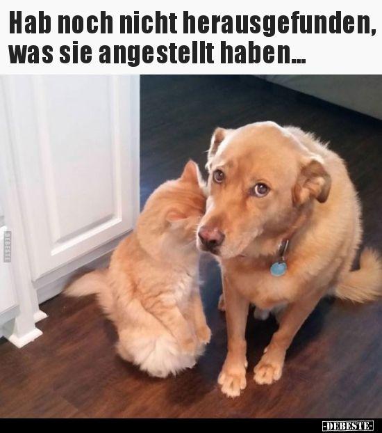 Eu não descobri o que eles fizeram .. | Fotos engraçadas, provérbios, …   – Witzige bilder sprüche