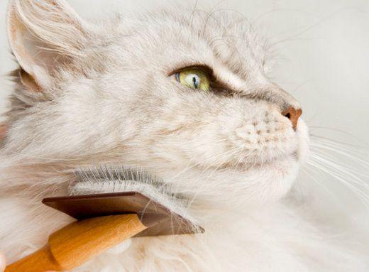 La corretta cura di unghie, pelo e orecchie del gatto - Animali in Salute