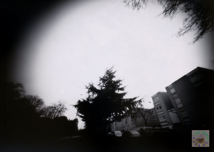 Jan Cam: Image 21    Tree in Clapham Common. Exposure time 90 secs