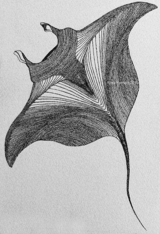 manta ray, drawn with dots. #healthebay