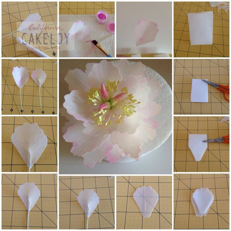 Peony Wafer Paper tutorial - Part 1                                                                                                                                                                                 More