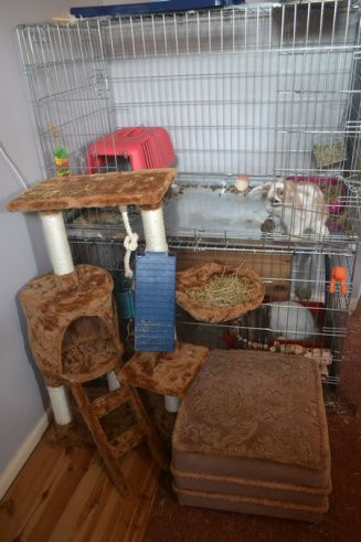 Rabbit living in XXL dog crate, uses a cat tree to get to the floor!!