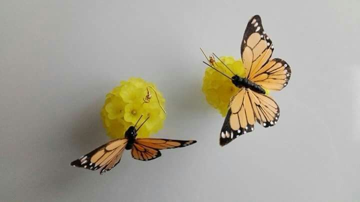 butterflies motyle schmetterlinge lemons cytryny włochy italien zitronen italy sicily sycylia sizilien