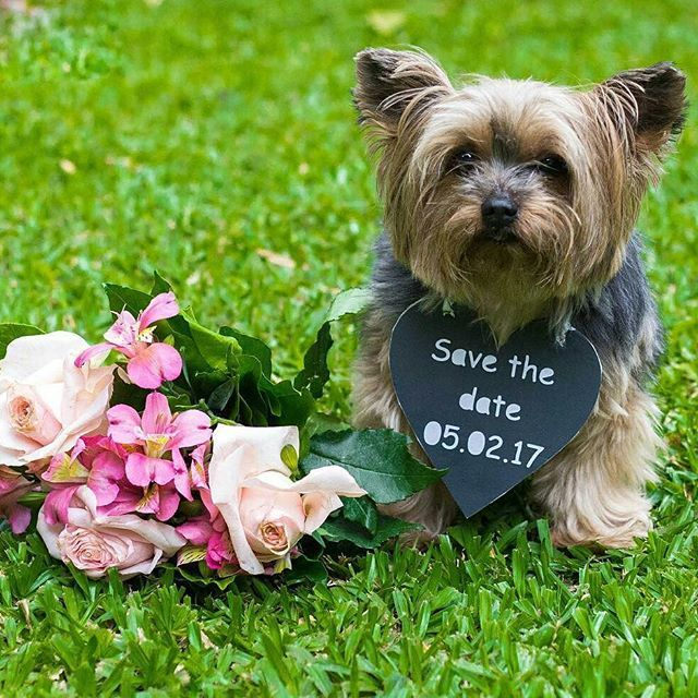I love pets: this really cute dog in the picture, a beautiful way to get your pet taking part in your wedding @noivasemcrise - Photo by @carlabrasiliense About your friend have 4 paws at all times 💗💜 #contodefadas #vidaadois #life # ilovemylife #princess # noiva2016 #noiva #bride #weddingblog #blognoiva #festa #casamento #casar #wedding #weddingday #herecomesthebride #noivado # inspiration #getinspired #fofura #love #bride #noivei #fiqueinoiva #noivado #casar #dicacasamento #ficadica #…