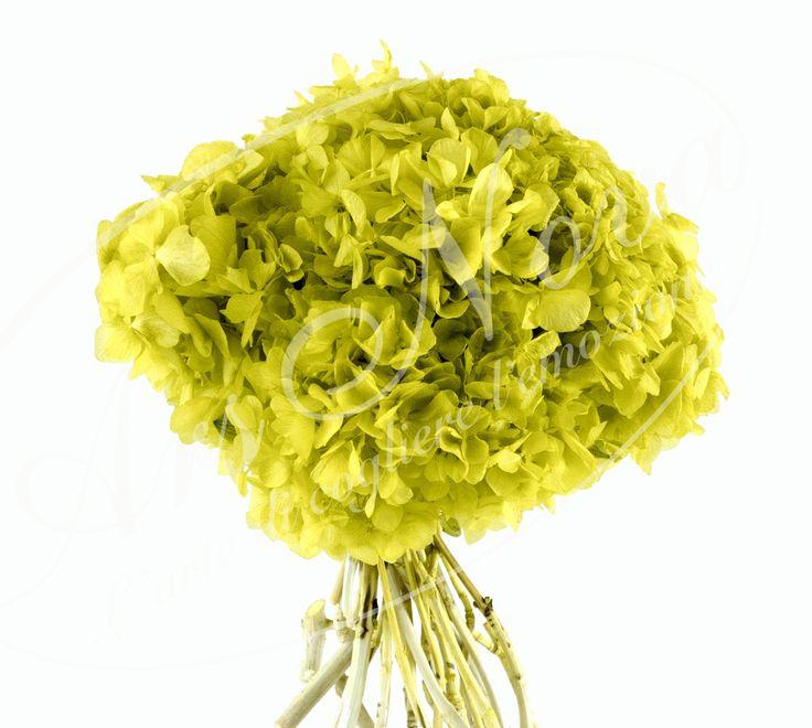Ortensia Stabilizzata Lime