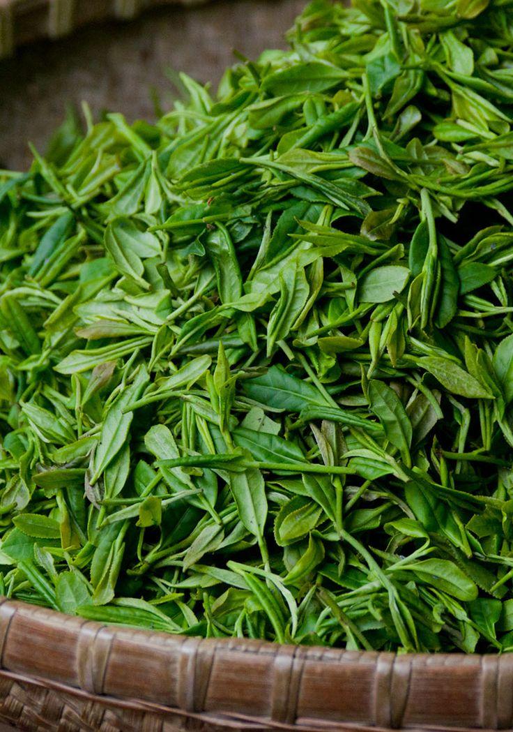 Cum poti avea un ten sanatos cu ceai verde?  https://www.landoftea.ro/improspatarea-tenului-cu-ceai-verde