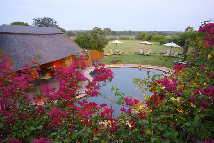 A view of the pool with the bush in the background