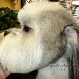 26 Best Dog Haircuts Images On Pinterest Dog Haircuts