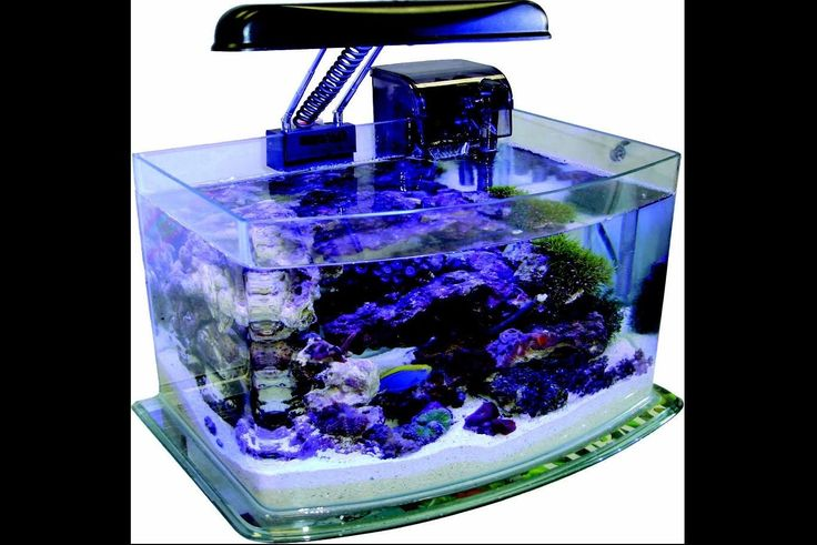 Animals Fish And Aquariums: Jbj 3 Gallon Curved Glass Picotope Fish Tank Aquarium Lamp/Filter Included Mx-30 BUY IT NOW ONLY: $51.17