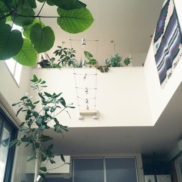 kuuuuさんの、シェフレラ,アロエ,フィカス,ルナファーザーの壁,吹き抜け,植物,観葉植物,壁/天井,のお部屋写真