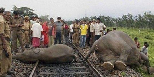 В Индии поезд врезался в группу слонов, переходивших железнодорожные пути