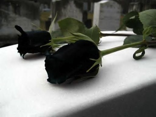 No hay nada más romántico para un amante del Dark Metal que le recuerden su aniversario con una rosa negra tatuada en el muslo, una flor que ha obsesionado a escritores y alquimistas desde hace siglos y que es el paradigma de la oscuridad o de las ciencias ocultas. Estas flores normalmente sólo pueden lograrse mediante la cuidada hibridación de dos variedades de rosas muy oscuras (rojas con violetas) o, directamente, mediante el falaz tintado que algunos viveros realizan para venderlas por…
