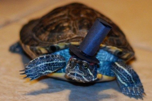"""""""Black-tie is necessary for such an occasion""""   20 Turtles Celebrate World Turtle Day"""