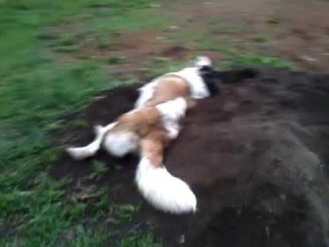 Вилли и Бася на куче чернозема