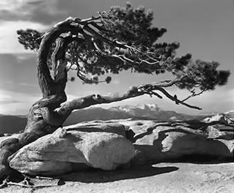Yosemite, Ansel Adams: I've always felt that Ansel Adams just GOT beauty. Like, Beauty in nature. One of my favorite things is trying to see the worls through his eyes. One time in Vancouver, there was a tree that had fallen over and the entire root system was showing and it was just really incredible.