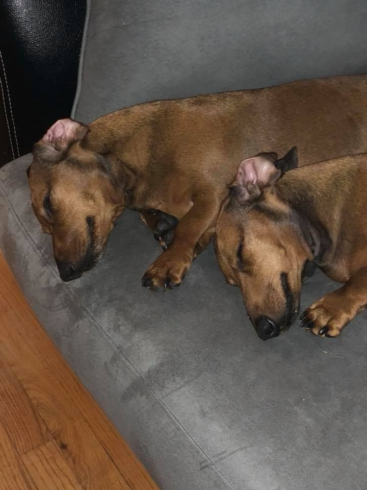 Bonded Brothers For Sure Even When They Are Sleeping It Has To Be