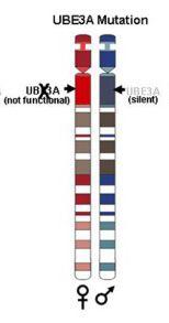 UBE3A mutation