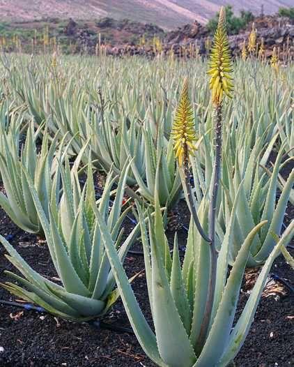 Consulenza gratuita Prodotti Aloe salute benessere cosmesi Contattami 3405630250