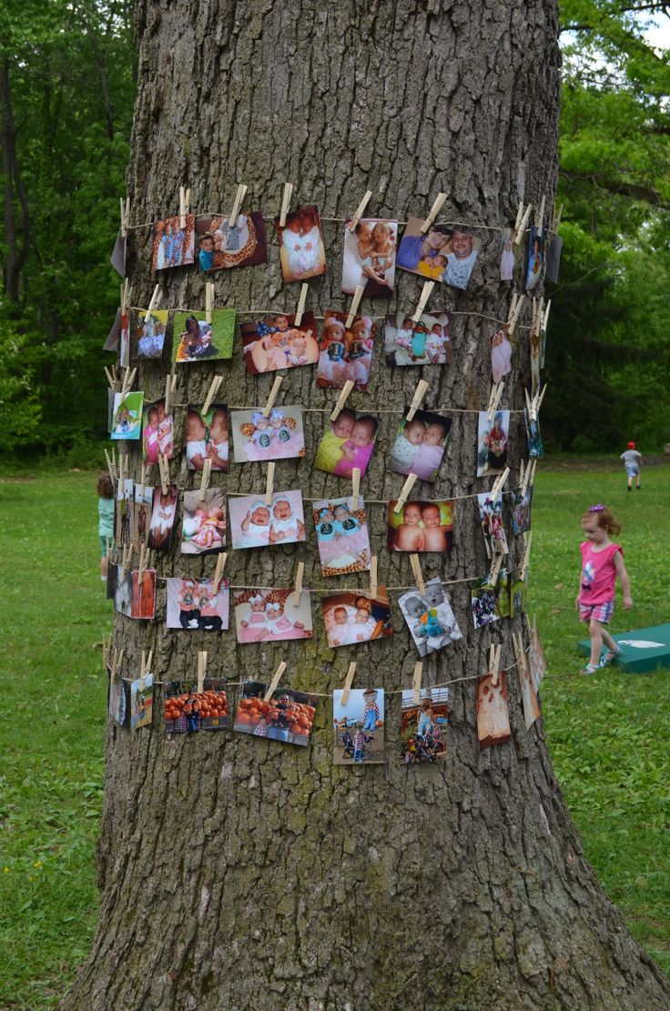Twins First Birthday, Picture Display, Tree Picture Display, Clothes Line Picture Display, Birthday, 1st Birthday, First Birthday