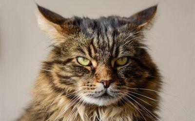 壁紙をダウンロードする プレデター, 猫