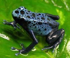 yağmur ormanlarında yaşayan canlılar ile ilgili görsel sonucu