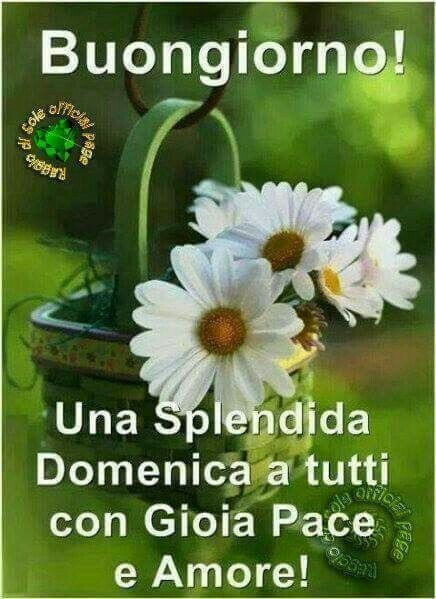 367 best images about buona domenica on pinterest for Top immagini buongiorno